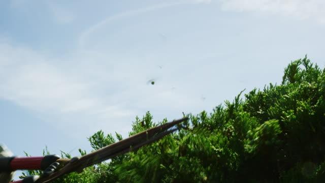 vidéos et rushes de une femme caucasienne portant des gants de jardinage utilise une paire de cisailles de haie manuelles pour tailler un buisson de genévrier sur une journée ensoleillée - coupant