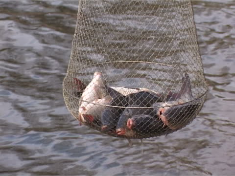 caught live fish in cages - medium group of animals stock videos & royalty-free footage
