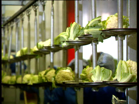 cauliflowers on rotating trays on production line in factory - crucifers stock videos and b-roll footage