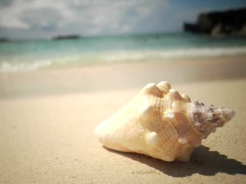 vídeos de stock, filmes e b-roll de cu, selective focus, cayman islands, grand cayman, smiths cove, conch shell on beach - concha parte do corpo animal