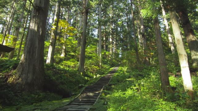 cedar forest in mt. haguro in yamagata prefecture,japan - cedar stock videos & royalty-free footage