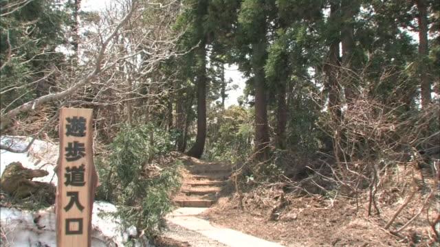 cedar forest in sado island - cedar stock videos & royalty-free footage