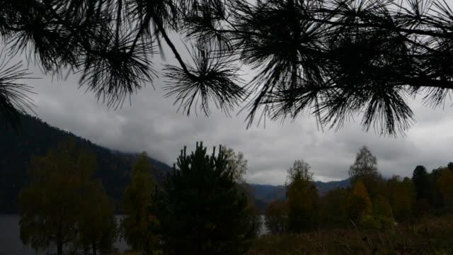 cedar tree and lake teletskoye - altai nature reserve - cedar stock videos & royalty-free footage