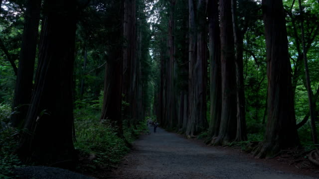 cedar-lined path to the upper shrine of the togakushi jinja (okusha) - shinto shrine stock videos & royalty-free footage