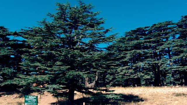cedars of god forest. pan-right across the few remaining ancient cedar trees in northern mount lebanon. - ヒマラヤスギ点の映像素材/bロール