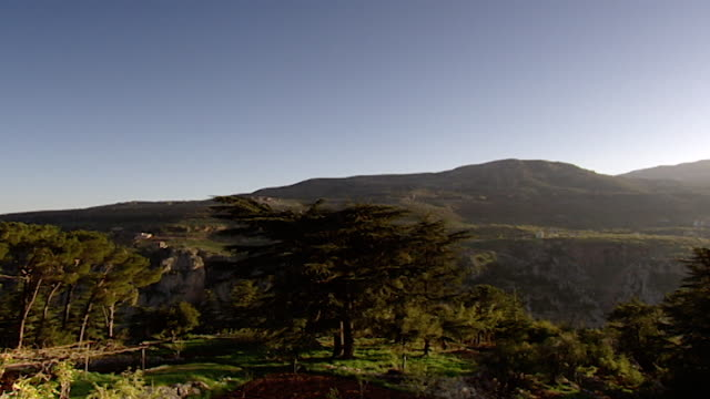 cedars of lebanon view of a cedar tree - snowcapped mountain stock videos & royalty-free footage