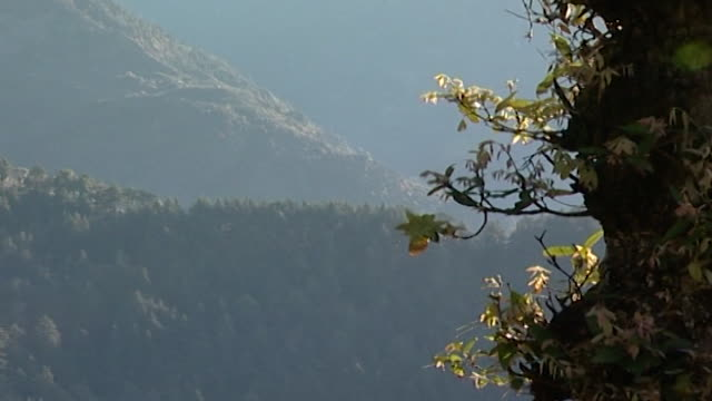 cedrus deodara, dharamsala. view of a himalayan landscape depicting a rocky slope jutting out from behind the cedar and hemlock blanketed hillside. - pinaceae stock videos & royalty-free footage