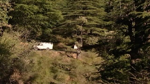 cedrus deodara, dharamsala. view of a white van driving through dense vegetation on a himalayan mountain road. - pinaceae stock videos & royalty-free footage
