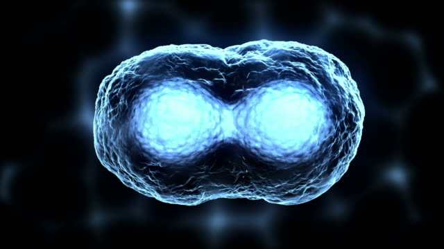 cell division or mitosis blue - biological cell stock videos and b-roll footage