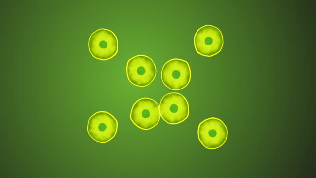 cell division - biology stock-videos und b-roll-filmmaterial