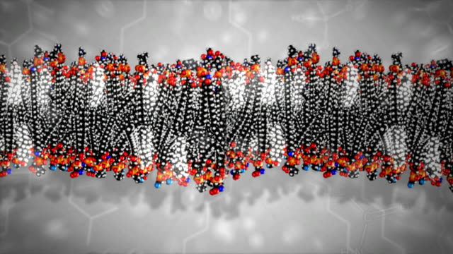 cell membrane - struttura cellulare video stock e b–roll