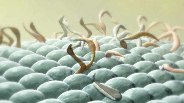 cell membrane - biomedical illustration stock videos & royalty-free footage