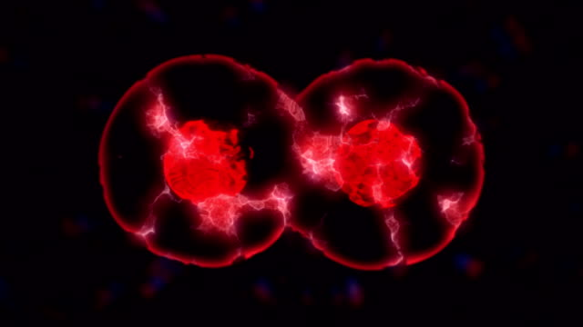 cells multiplying or mitosis under microscope - profase video stock e b–roll