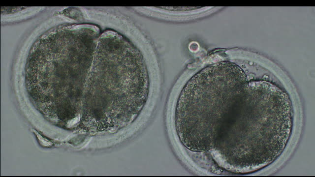 macro cells seen through microscope at high resolution / united states - stammzelle stock-videos und b-roll-filmmaterial