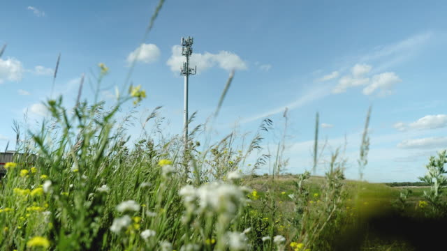 cellular telecom tower - animal antenna stock videos & royalty-free footage