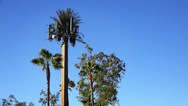 cellular tower camouflaged as a tree - disguise stock videos & royalty-free footage