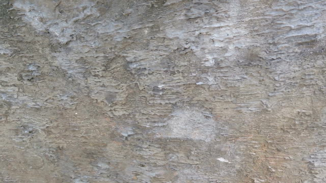 cement walls weathered rough and dirty for background design. - weathered stock videos and b-roll footage