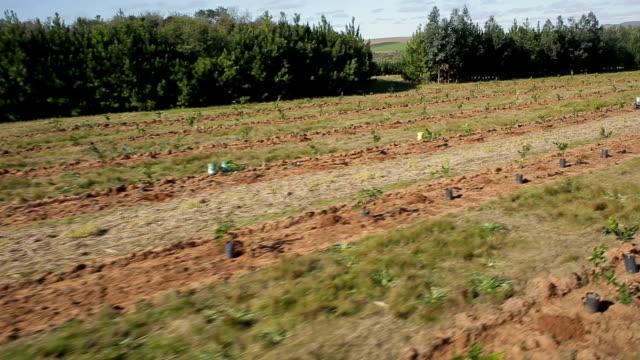 cena aérea de campos de agricultura de laranja - fruta stock videos & royalty-free footage