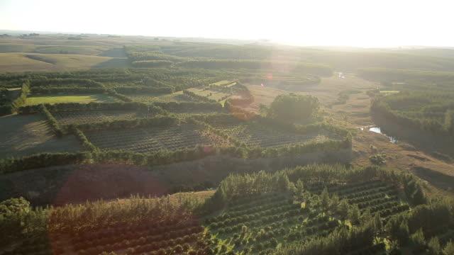 vídeos de stock e filmes b-roll de cena aérea de campos de agricultura de laranja - pomar