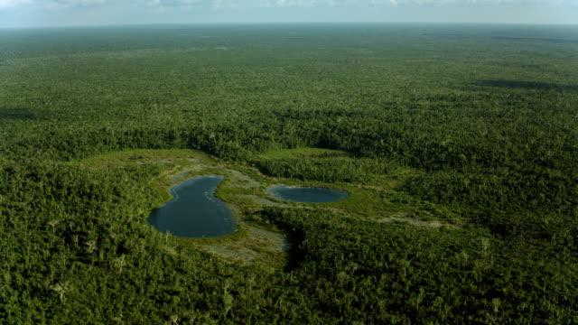 vídeos de stock, filmes e b-roll de cenotes on mexico's yucatan peninsula - yucatán
