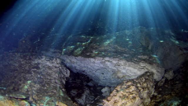 vidéos et rushes de cenotes - vincent pommeyrol
