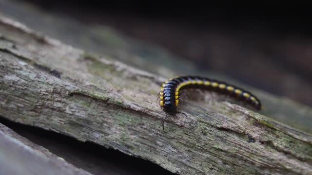centipede walks along a branch - limb body part stock videos & royalty-free footage