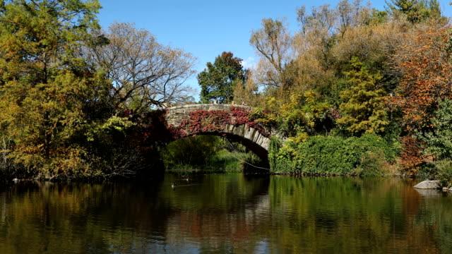 central park autumn - vite flora video stock e b–roll