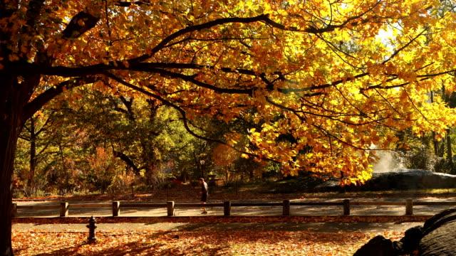 vídeos de stock e filmes b-roll de central park no outono - outono