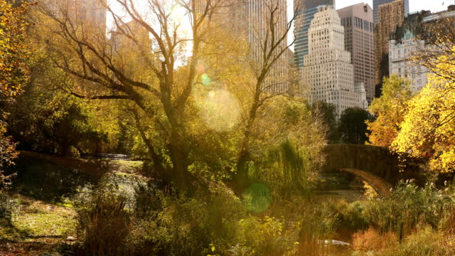 central park autumn views - central park manhattan stock videos & royalty-free footage