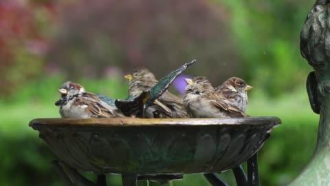 central park birdbath slow motion - new york - スズメ点の映像素材/bロール