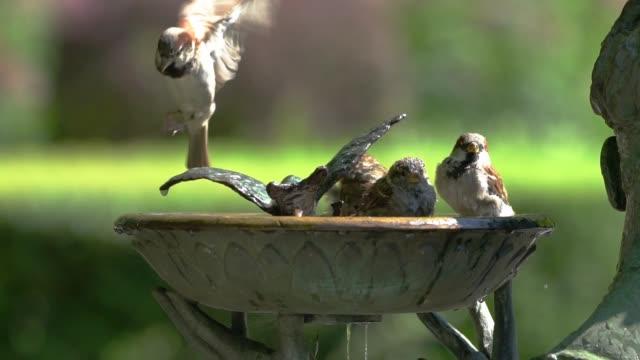 vídeos y material grabado en eventos de stock de central park birdbath slow motion - new york - baño para pájaros