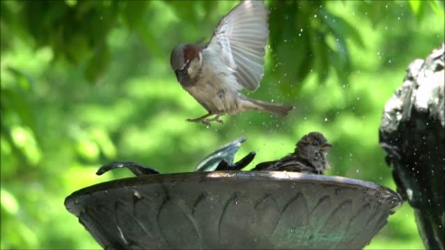 vídeos y material grabado en eventos de stock de central park birdbath slow motion - baño para pájaros