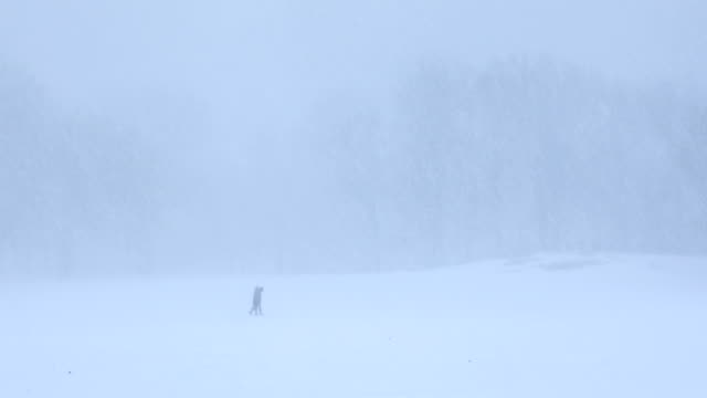stockvideo's en b-roll-footage met central park blizzard - sneeuwstorm