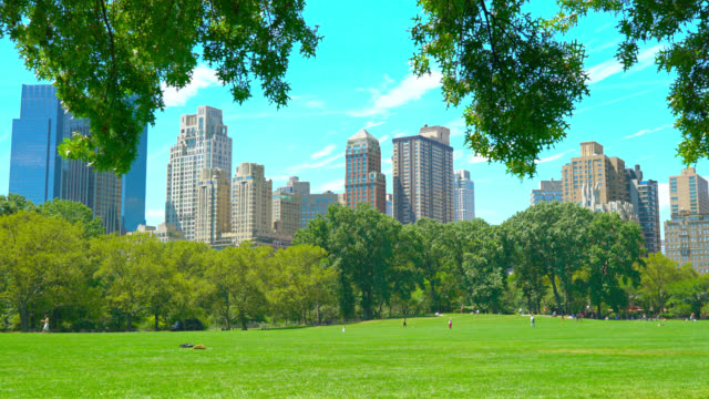 central park in new york - lawn stock videos & royalty-free footage