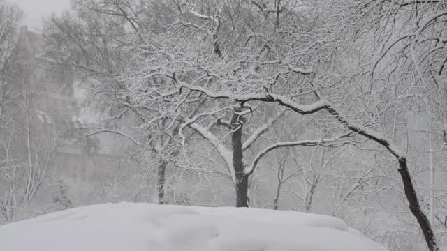 WS TD Central Park in snow / New York City, New York, USA