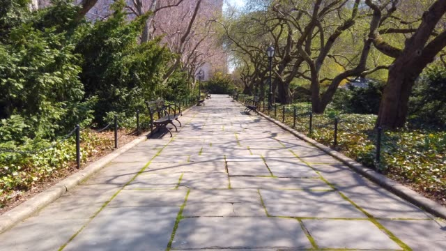 vidéos et rushes de central park, manhattan - banc public