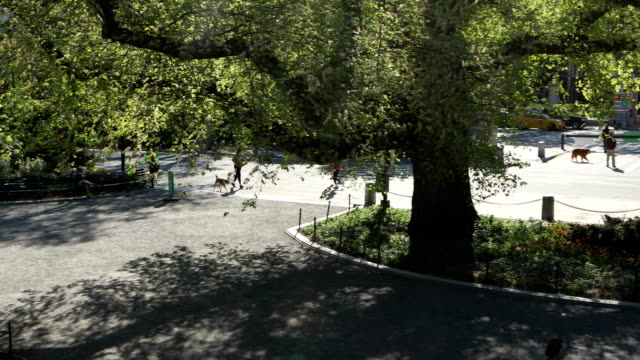 central park mornings - central park manhattan stock videos & royalty-free footage