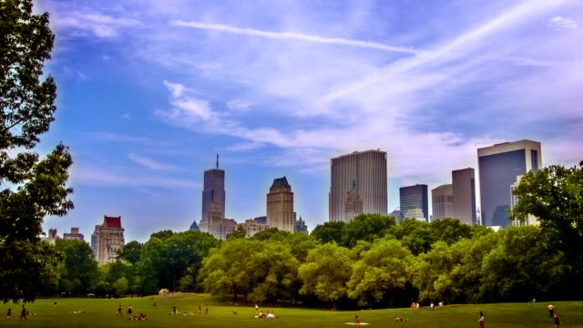 central park new york - sheep meadow central park stock videos and b-roll footage