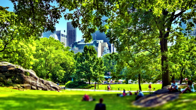central park, new york - gartenanlage stock-videos und b-roll-filmmaterial