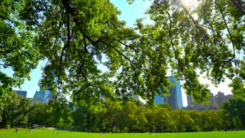 central park new york - central park manhattan stock videos & royalty-free footage