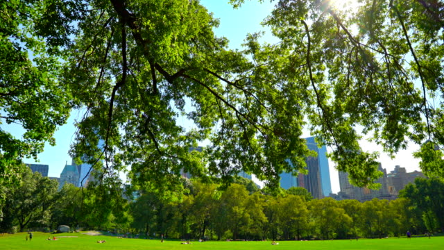 central park new york - central park manhattan stock videos & royalty-free footage
