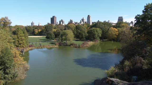central park nyc - great lawn, nyc skyline, fall foliage - great lawn stock videos and b-roll footage