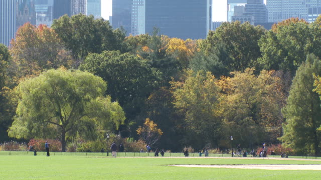 central park nyc in autumn - great lawn & fall foliage - great lawn stock videos and b-roll footage