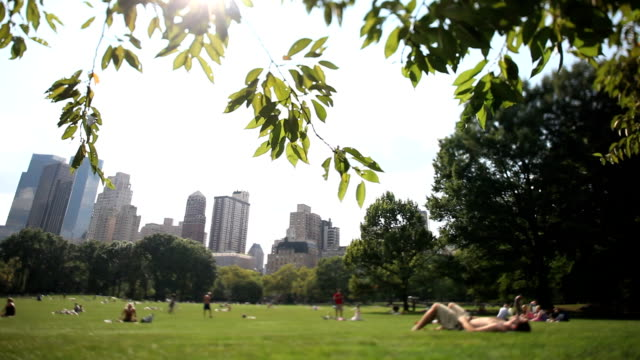 central park nyc - great lawn stock videos and b-roll footage