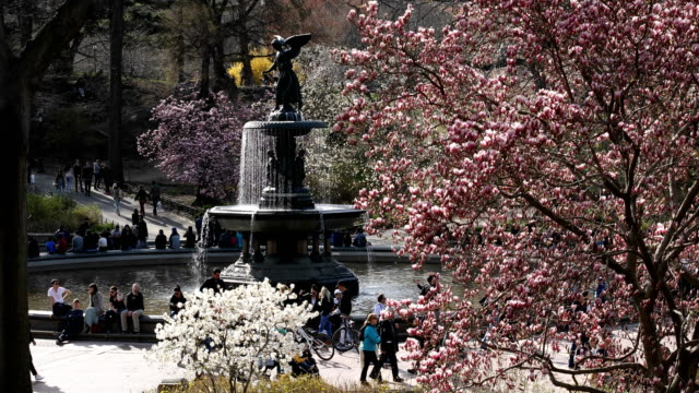 vídeos de stock e filmes b-roll de central park springtime blossoms - fonte bethesda