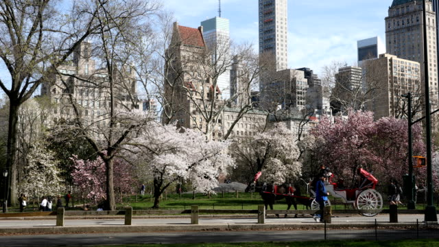 central park springtime crowds - carriage stock videos & royalty-free footage
