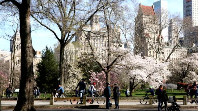 central park springtime crowds - central park manhattan stock videos & royalty-free footage