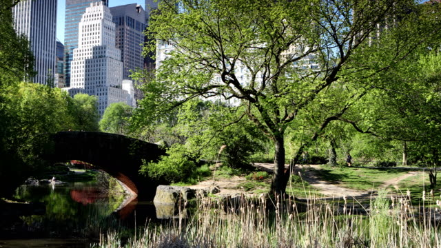 central park springtime panorama - 4k resolution stock videos & royalty-free footage