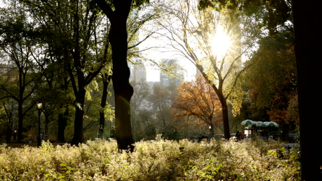 central park illuminato dal sole autunno - lush video stock e b–roll