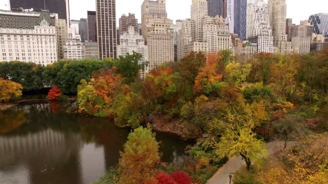 vídeos de stock, filmes e b-roll de nyc central park - inclinar